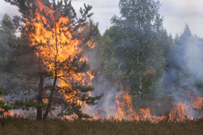 Wildfires caused by lightning and natural disasters